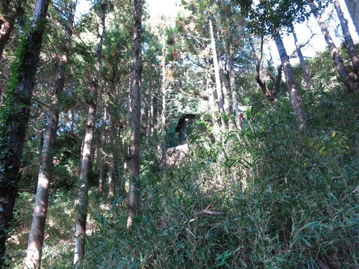 岩田神社杉の木立